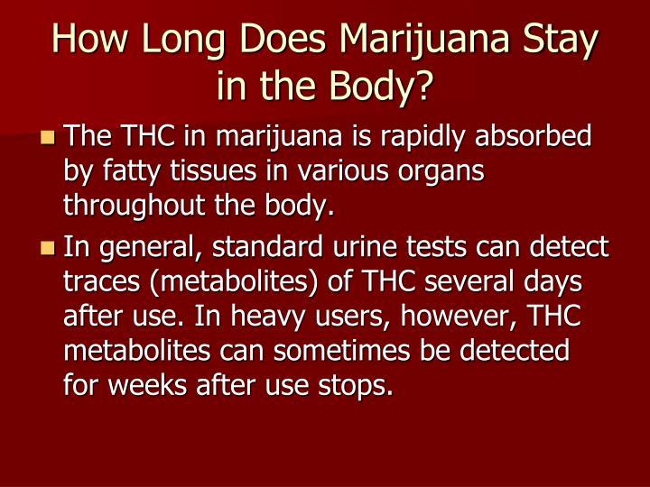 How Long Does Marijuana Stay in the Body?