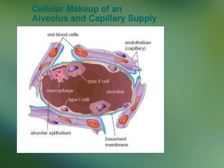 Cellular Makeup of an