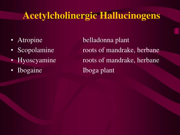 Atropinebelladonna plant