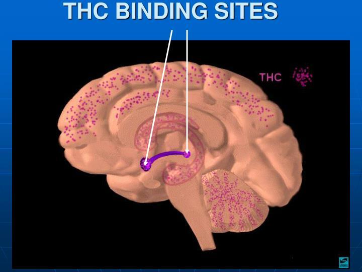 THC BINDING SITES