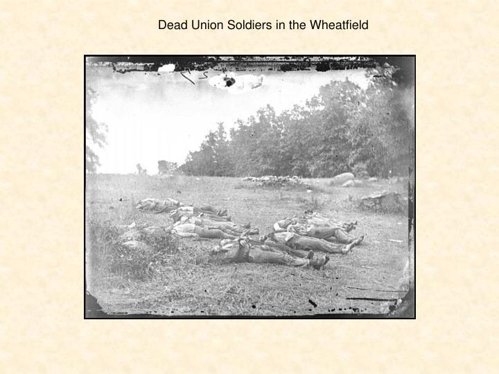 Dead Union Soldiers in the Wheatfield