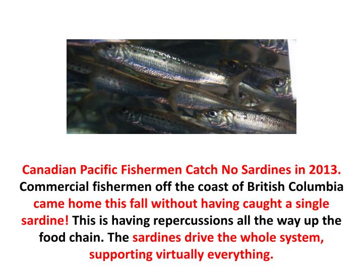 Canadian Pacific Fishermen Catch No Sardines in 2013.