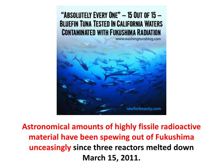 Astronomical amounts of highly fissile radioactive material have been spewing out of Fukushima unceasingly