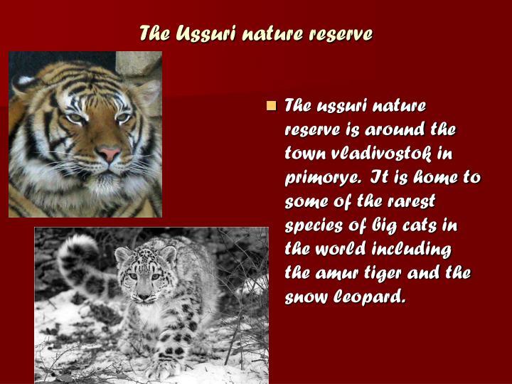 The Ussuri nature reserve