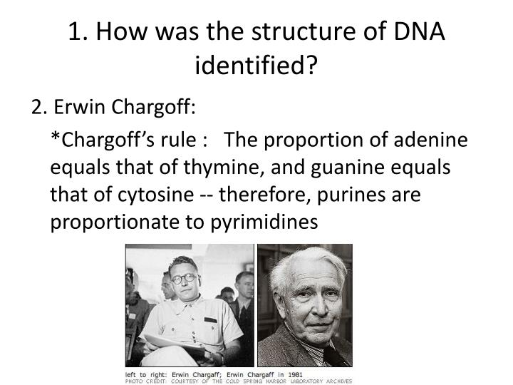 1. How was the structure of DNA identified?