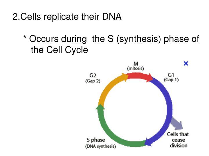 Cells replicate their DNA
