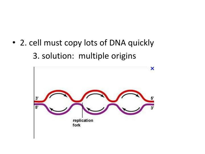 2. cell must copy lots of DNA quickly