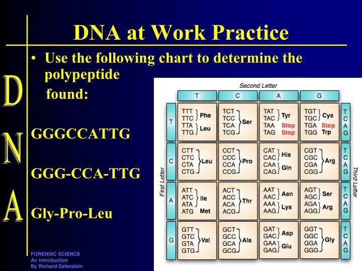 DNA at Work Practice