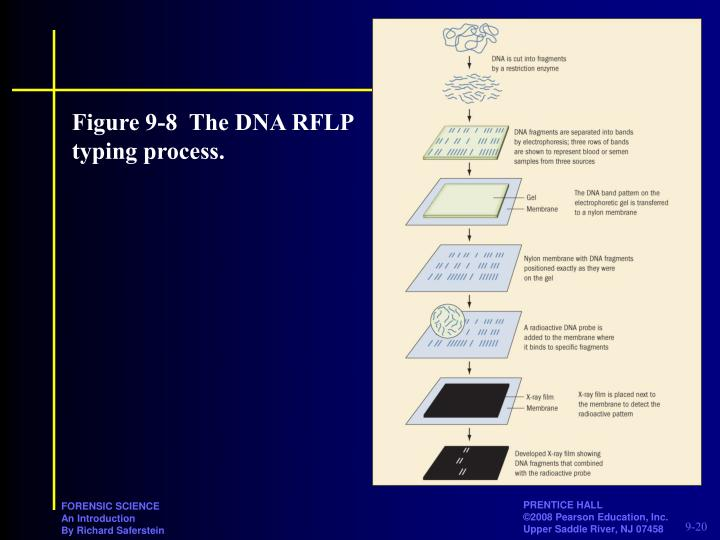 Figure 9-8The DNA RFLP typing process.