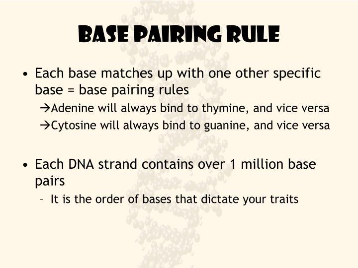 Base pairing rule
