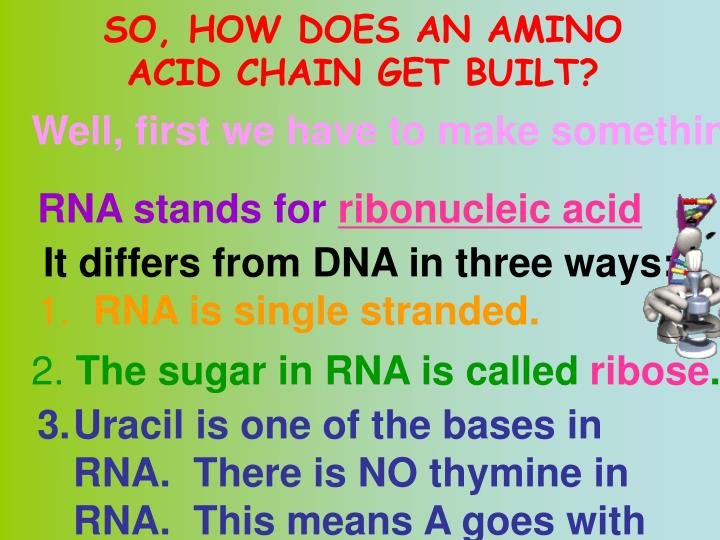 SO, HOW DOES AN AMINO ACID CHAIN GET BUILT?