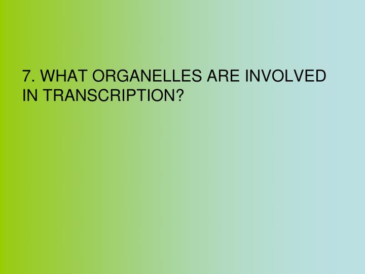 7. WHAT ORGANELLES ARE INVOLVED IN TRANSCRIPTION?