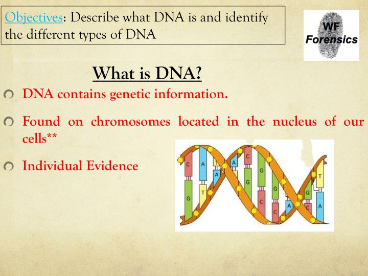 the importance of dna evidence A dna profile developed from evidence at one crime scene is compared with a dna profile developed from evidence found at another crime scene, they can be linked to each other or to the same perpetrator, whether the crime was committed locally or in another state.