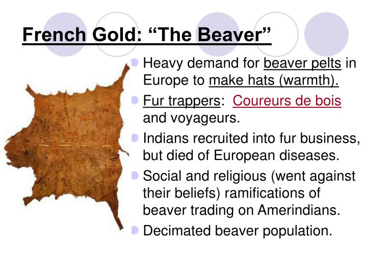 """French Gold: """"The Beaver"""""""