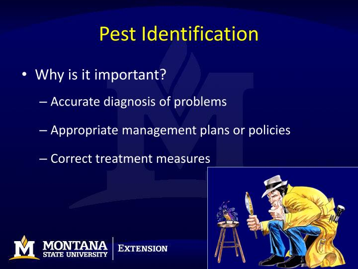 Pest Identification