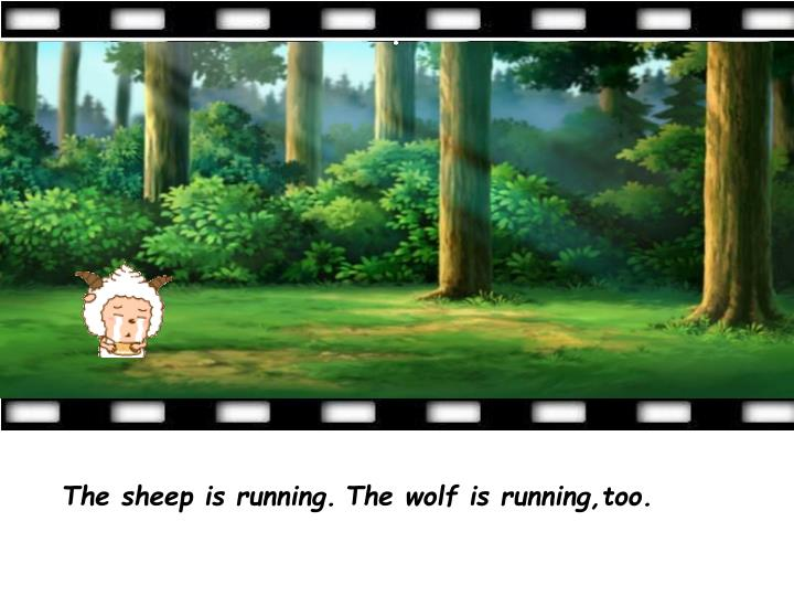 The sheep is running.