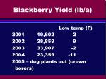 blackberry yield lb a