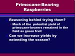 primocane bearing raspberries