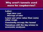why aren t tunnels used more for raspberries