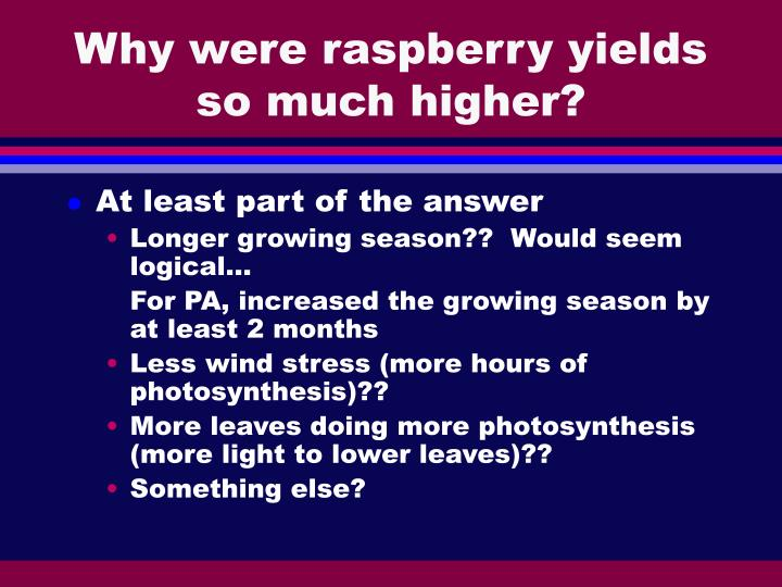 Why were raspberry yields so much higher?