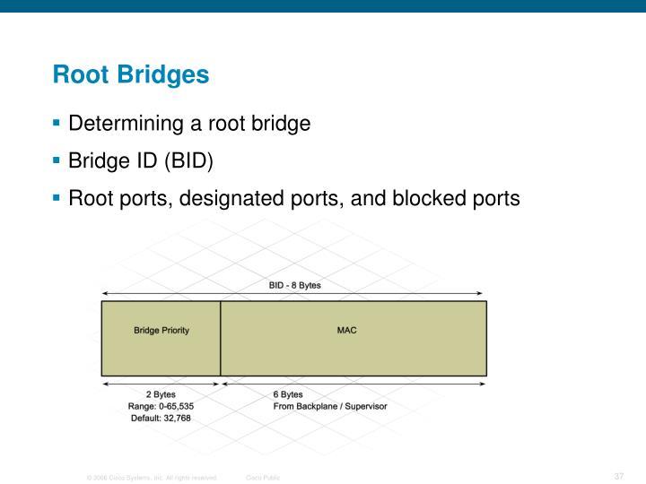 Root Bridges