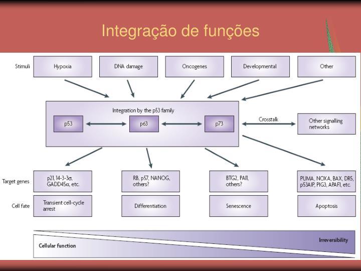 Integração de funções