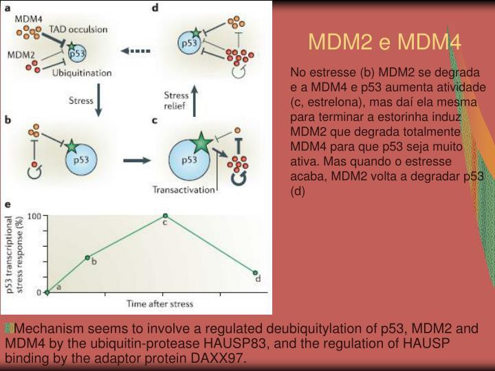MDM2 e MDM4