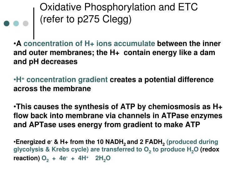 Oxidative Phosphorylation and ETC (refer to p275 Clegg)