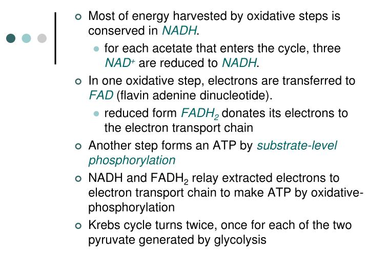 Most of energy harvested by oxidative steps is conserved in
