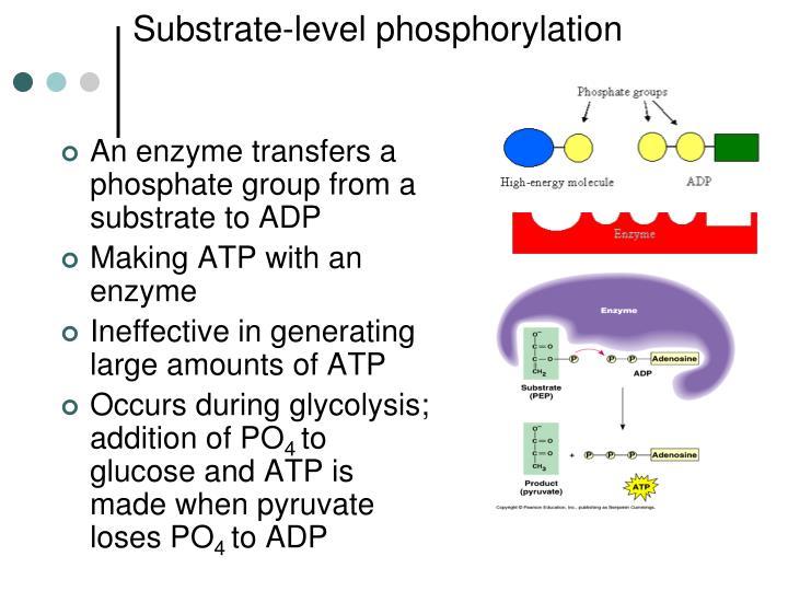 Substrate-level phosphorylation