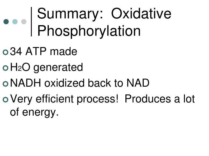 Summary:  Oxidative Phosphorylation