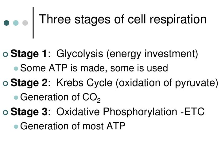 Three stages of cell respiration