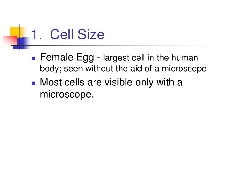 1.  Cell Size
