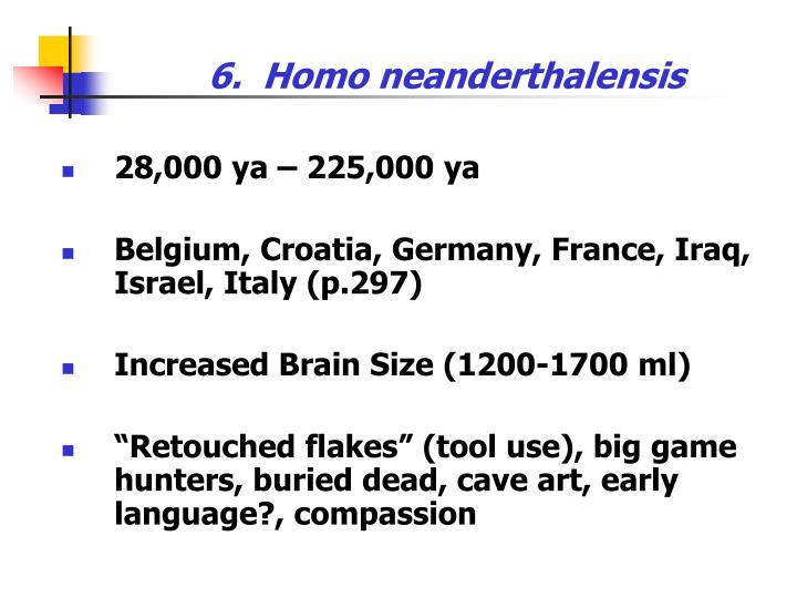 6.  Homo neanderthalensis