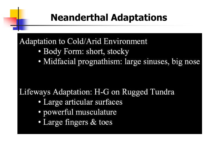 Neanderthal Adaptations