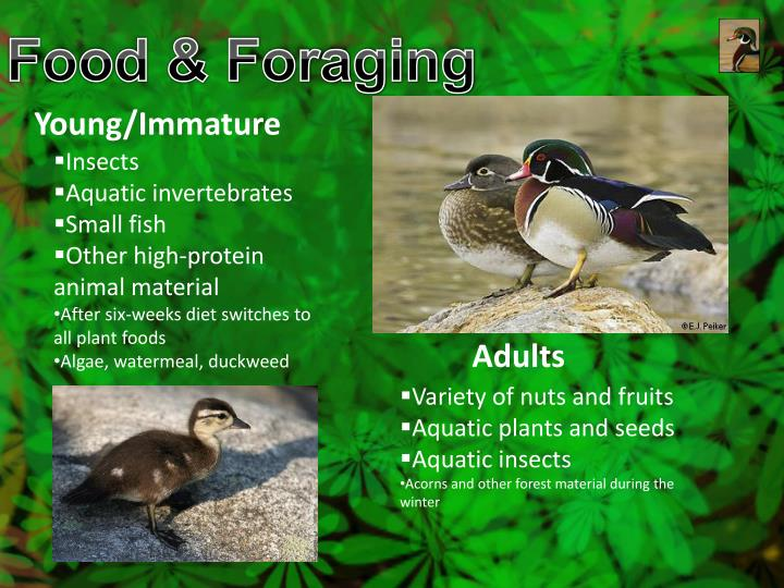 Food & Foraging