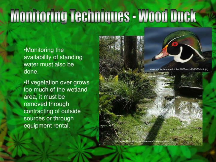 Monitoring Techniques - Wood Duck