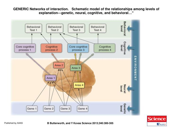 """GENERIC Networks of interaction.   Schematic model of the relationships among levels of explanation—genetic, neural, cognitive, and behavioral…"""""""