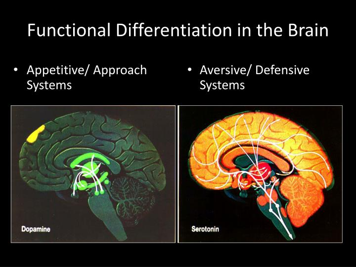 Functional Differentiation in the Brain