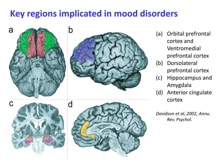 Key regions implicated in mood disorders