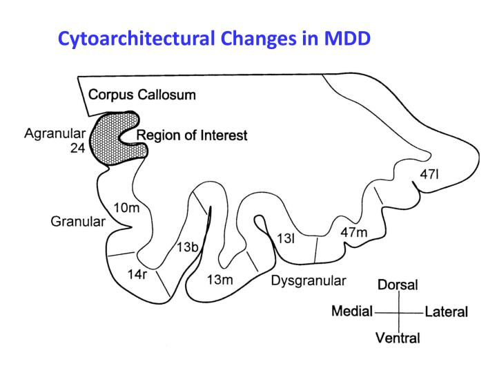 Cytoarchitectural Changes in MDD