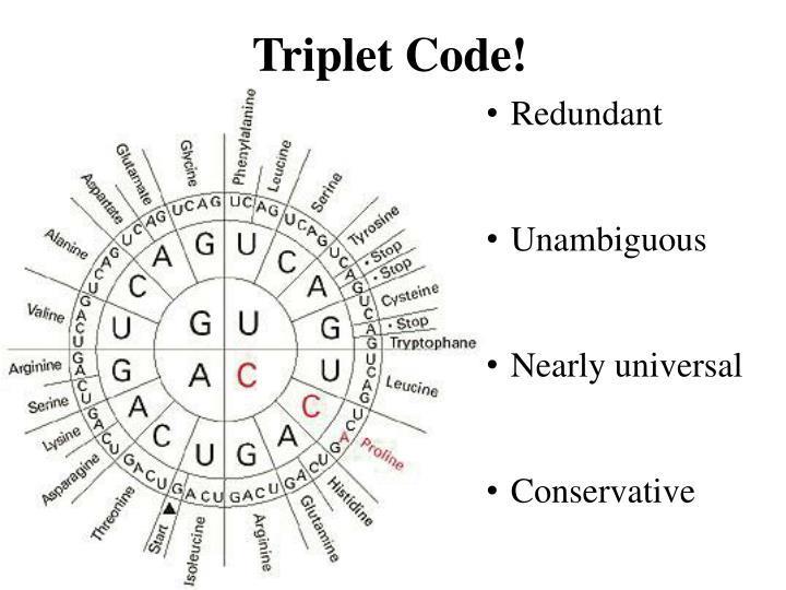Triplet Code!