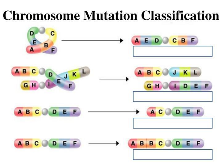 Chromosome Mutation Classification