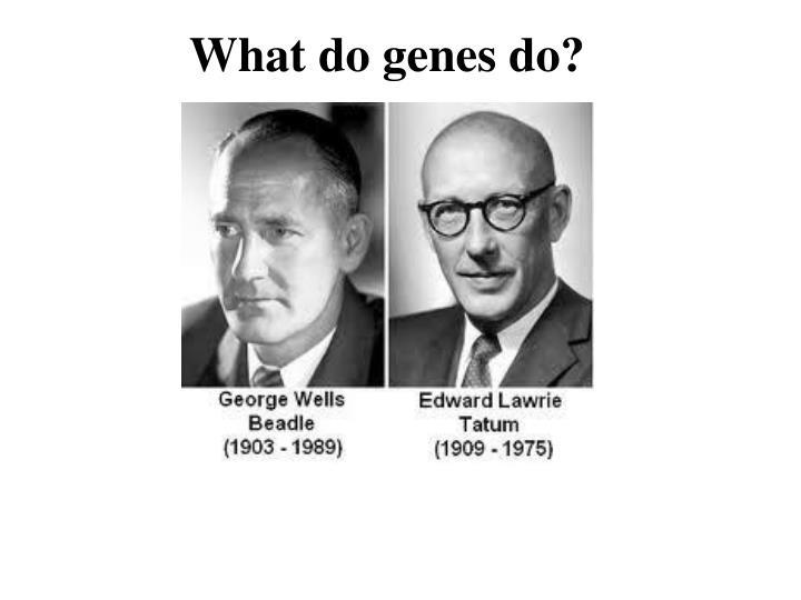 What do genes do?