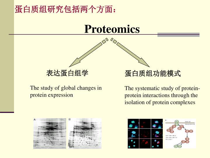 蛋白质组研究包括两个方面: