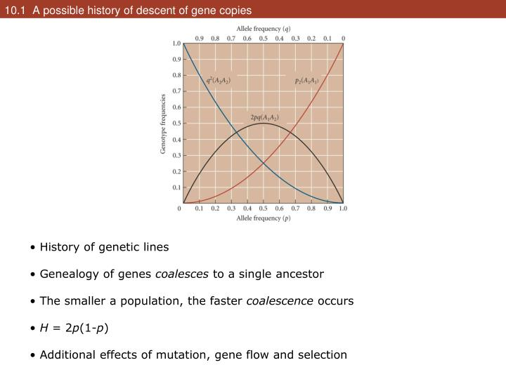 10.1  A possible history of descent of gene copies
