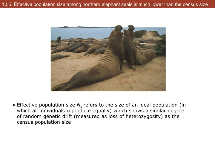 10.5  Effective population size among northern elephant seals is much lower than the census size