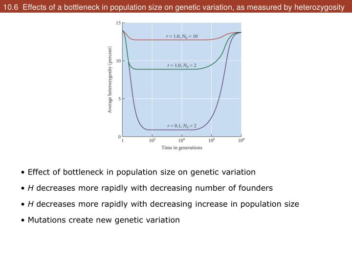 10.6  Effects of a bottleneck in population size on genetic variation, as measured by heterozygosity