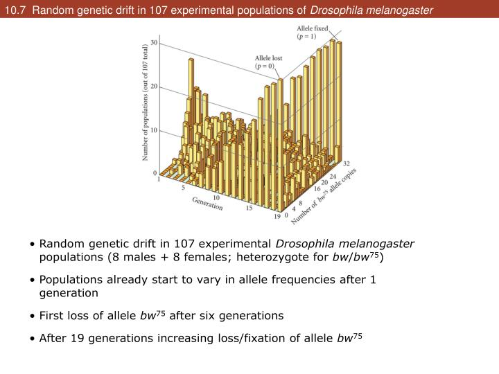 10.7  Random genetic drift in 107 experimental populations of
