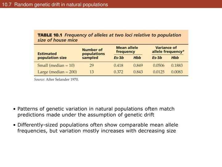 10.7  Random genetic drift in natural populations